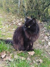 待っている黒猫 (Gatto nero) - エミリアからの便り