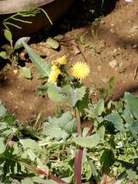 庭で咲く・野辺の花・・・ - 【出逢いの花々】