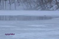 しろい霧が流れる - ジージーライダーの自然彩彩
