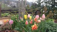 4月の庭(その3) - 今から・花
