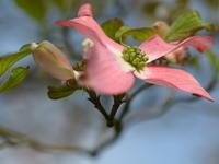 晴れた日の庭の花 - 休日登山日記