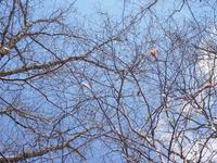 芽吹き直前 - 庭日和