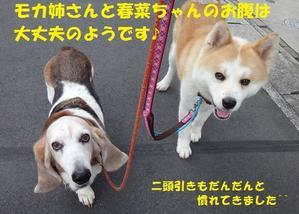 平和な1日🎵(低脂肪療法食) - もももの部屋(家族を待っている保護犬たちと我家の愛犬のブログです)