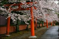 竹中稲荷神社 - Deep Season
