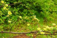 4月の花 カナリーバード - 雲空海
