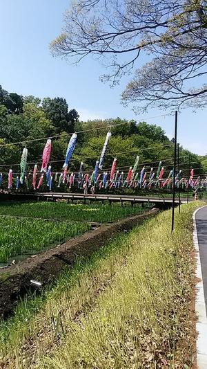 横浜里山ガーデンフォトぶらりー【テレドラ川柳575】 - りぽっと今日助の植え替え日記