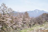 小淵沢の桜 - YUKKESCRAP
