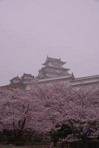 早朝の姫路城の桜(2017/4/8) 其の③ - 南の気ままな写真日記