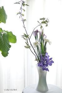 花を愛で季節を味わう - お茶をどうぞ♪