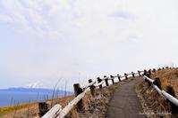 桃岩展望台でエゾエンゴサク開花中 - 礼文島★ハナとわたし