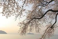 桜紀行2017関西版-滋賀- - さんたの富士山と癒しの射心館