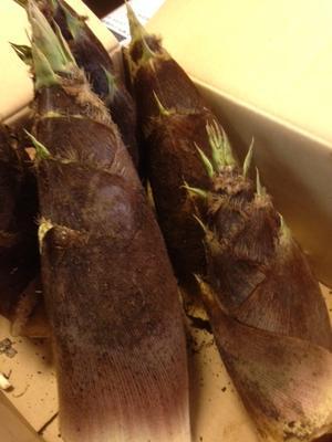 アオサの佃煮 - 日々の暮らし  つぶやき