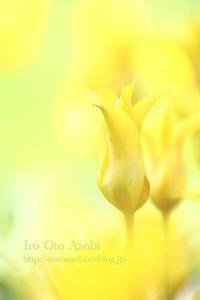 hearty yellow - 色音あそび