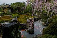 城南宮の桜 - 鏡花水月