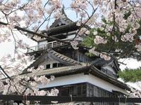 桜 Ⅱ - gracefully heart