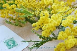 ミモザの花言葉は「秘めた恋」、お薦め缶詰 - *Flower Essence*