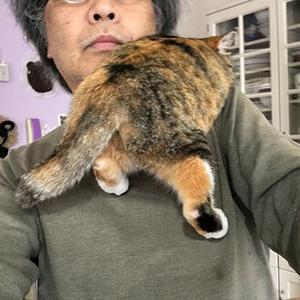 肩のりすと - ぶつぶつ独り言2(うちの猫ら2017)