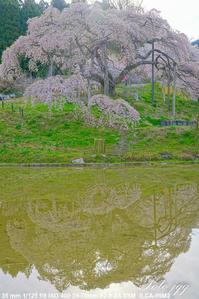 中島の地蔵桜 二本松市 ・・・ - ぶらりカメラウォッチ・・