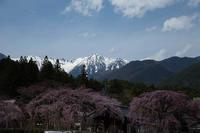 信濃路の桜 010 - 感動模写Ⅱ