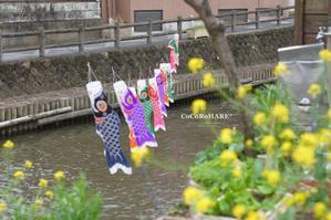 カメラ仲間との美味しい楽しい撮影会* 栃木市 - ココロハレ*