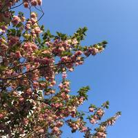 春、お片づけのコツは、、 - Clean up Life~お片づけサポート~