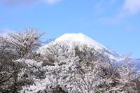 忍野八海の春 - 風とこだま