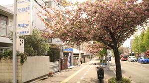 箕面 八重桜  - 人生・乗り物・熱血野郎