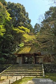 Kyoto trip  春の京都旅 洛東  - teddy blue