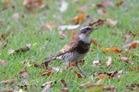 やっと夏らしくなってきたお城 - 野鳥写真日記 自分用アーカイブズ