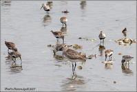 春の干潟 - 野鳥の素顔 <野鳥と・・・他、日々の出来事>