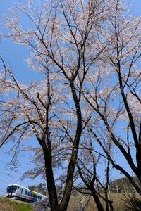 桜と特急「あずさ」① - My B Side Life season2