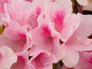 「手を取って 共に登らん 花の山」-円歌の訃報で思い出す言葉。 - 噺の話