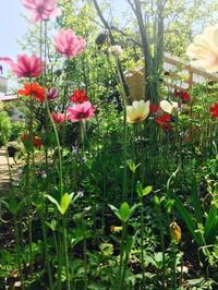 Kusaniwa Open Garden  2017       ー 葉山芸術祭ー - Healing Garden  ー草庭ー