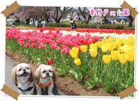 2017年4月16日 秦野戸川公園 - 週末は、愛犬モモと永吉とお出かけ!Kimi's Eye