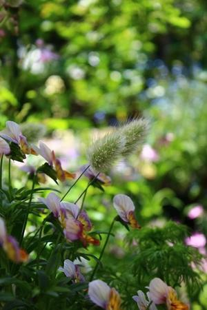 お庭の続き~🎶 - すきなことにかこまれて