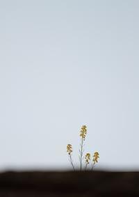 野の花 - 心 色