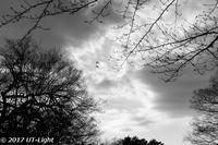 Mモノクローム - Under The Light Photographs