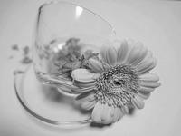 ガラスのポーセリンレッスン - Noriko。の気まぐれ Diary       綺麗・可愛い・楽しい・幸せ!日記