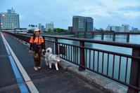 急げいそげ~雨が降る前に! (^o^) - 犬連れへんろ*二人と一匹のはなし*