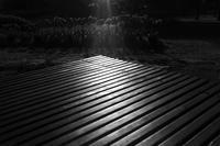 夕暮れの散歩道で - Yoshi-A の写真の楽しみ