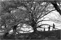'17 桜*Ⅶ -一人じゃないのよモノクロ祭り- - It's only photo