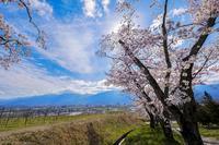 170422安曇野の桜 - 一人の読者との対話