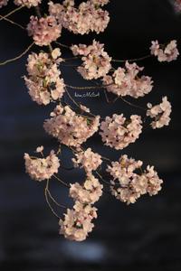 残酷な片思い - A primrose by the river's brim
