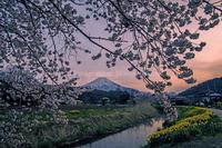 忍野村より桜便り - 山麓風景と編み物