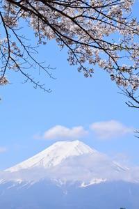 * 富士山と桜 * - 今日もカメラを手に・・・♪