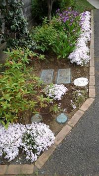 芝桜もりもり - うちの庭の備忘録 green's garden