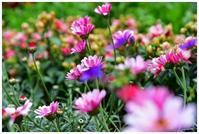 春の色彩 -  one's  heart