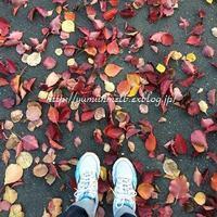 秋です - メルボルン奮闘日記2