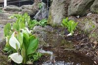 裏山 - 農家の母の咲*咲花日記