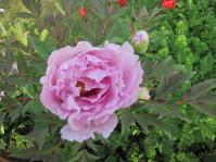 庭の花たち - 花の自由旋律